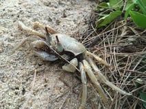 Seul fond de crabe de temps gentil Photographie stock libre de droits