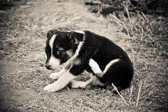 Seul portrait de chien sur la plage Bulgarie Image libre de droits