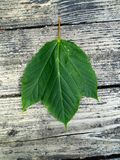 seul pousse des feuilles je Image stock
