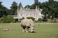 Seul rhinocéros dans le Cotswolds photo stock