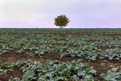 Seul un arbre à une ferme photos libres de droits