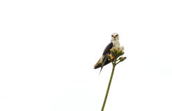 Seul un oiseau sur l'arbre Images libres de droits