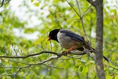 Seul un support d'oiseau sur l'arbre recherchant un ami Photos stock