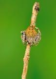 Seule araignée Image libre de droits