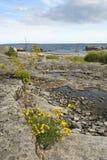 Seule nature suédoise de côte Image libre de droits