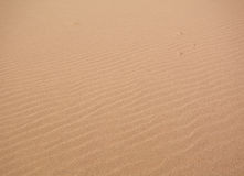 Seulement dans le désert Photographie stock