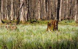 Seulement dans les bois Image libre de droits