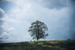 Seulement un support d'arbre parmi la nature Image libre de droits
