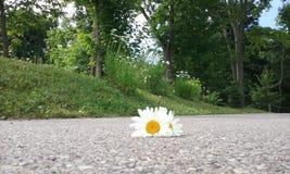 Seules fleurs Photos stock