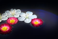 Seuls fond/fleurs Photo stock