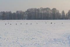 Seunset in winter royalty free stock photos