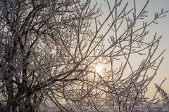 Seunset in winter royalty free stock image