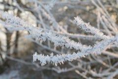 Seunset in winter stock photos