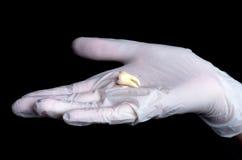 Seus dentes em nossas mãos Imagem de Stock