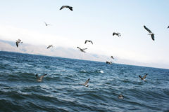 Sevan lake Stock Photography
