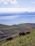 Sevan Lake Royalty Free Stock Photo