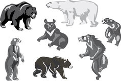 Seven bears isolated on white Royalty Free Stock Photo