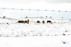 Seven behind the fence Royalty Free Stock Photo