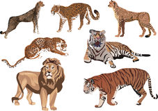 Seven big color cats Royalty Free Stock Photos