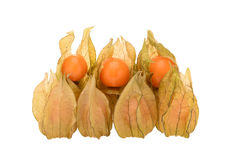 Seven cape gooseberries in pods. Cape gooseberries in pods, some opened with ripe berry visible inside stock photos
