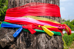 Seven color satin on tree, faithful in thai Stock Image