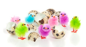 Seven colorful chicks Stock Photos