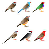 Seven colorful finches. White background Royalty Free Stock Image