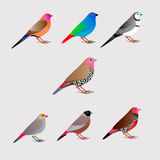 Seven colorfull finches. Seven colorfull pet birds - finches, vector Royalty Free Stock Image