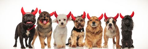 Seven Cute Dogs Wearing Devil Horns Royalty Free Stock Photo