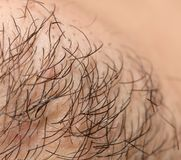 Seven Day Old Beard. Seven day old beard on a Caucasian male. Macro close up. Photo of an abstract texture Stock Photos