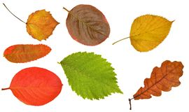 Seven different leaves on white Stock Photography