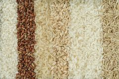 Seven different varieties of rice are placed in rows. stock photography