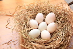 Seven duck eggs on straw Stock Photo