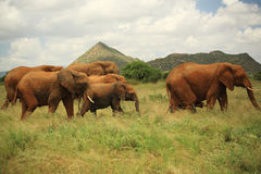 Seven elephants Stock Images
