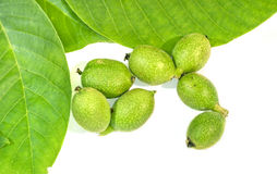 Seven green young walnuts in husks with walnuts leavs on white b Royalty Free Stock Photo