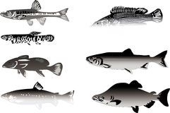 Seven grey fishes isolated on white Stock Image