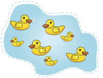 Seven happy ducks swimming in a pond. Ducks on a vilage pond Stock Image