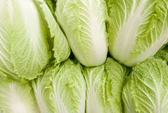 Seven heads of Napa cabbage. Seven light green heads of Chinese cabbage with curly leaves forming an overall pattern royalty free stock image