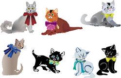 Seven isolated cats on white Stock Photography