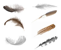 Seven isolated feathers Stock Photo