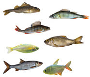 Seven isolated fishes Stock Photo