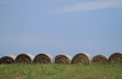 Seven large round bales of hay Stock Image