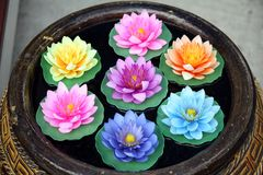 Seven lotus Royalty Free Stock Images