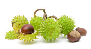 Seven mature chestnuts on a white background Royalty Free Stock Image