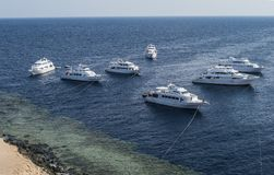 Seven moored diver`s yachts in the Red Sea, Egypt. White boats on a dark blue with gree sea look great for a travel agency or for. Seven moored diver`s yachts in Royalty Free Stock Photos