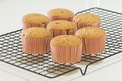 Seven newly made cinnamon cupcakes in a cooling rack Stock Photography