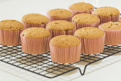 Seven newly made cinnamon cupcakes in a cooling rack Stock Photo