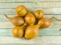 Seven onions stock photos