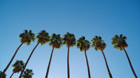 Seven Palm trees in a row Royalty Free Stock Photography