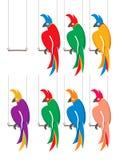 Seven parrots. Stock Photos